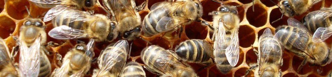 Костромской мёд