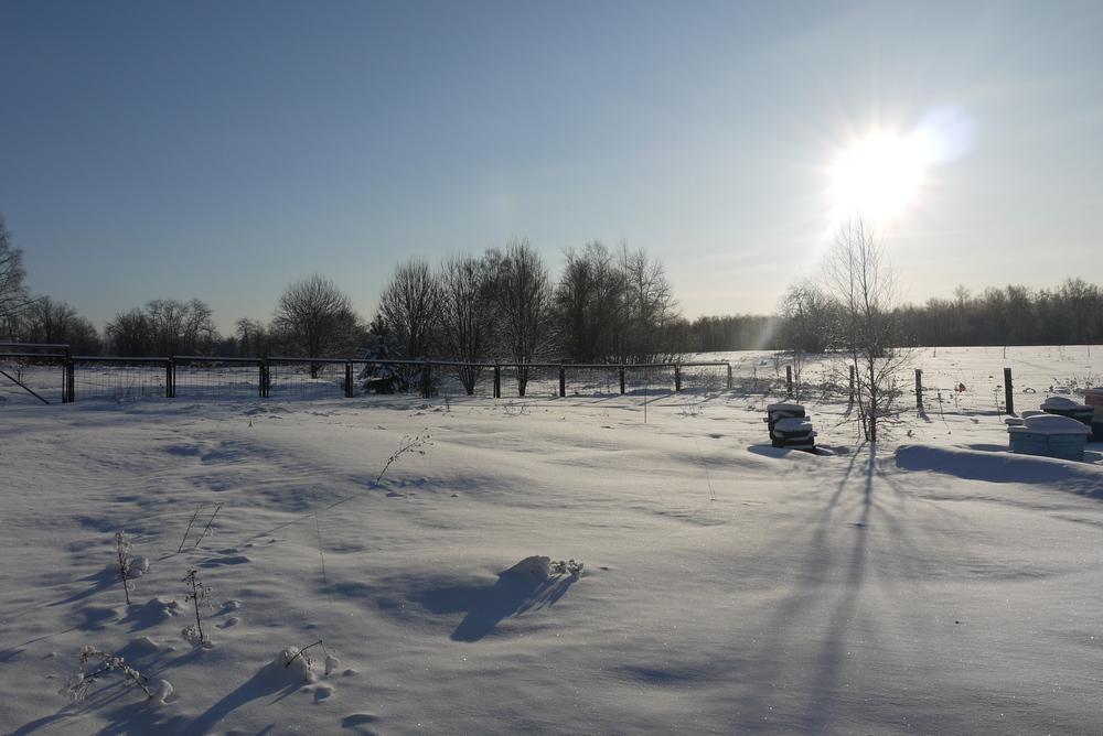 снег и мороз на пасеке