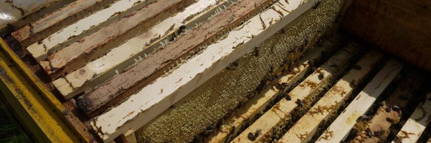 как получить свой мед
