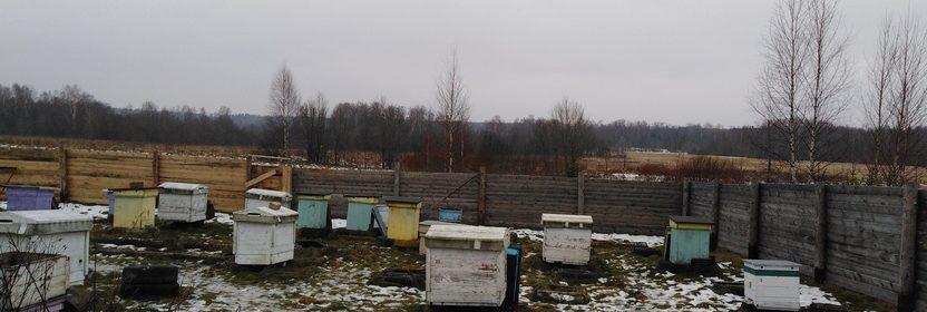 итоги пчеловодного сезона
