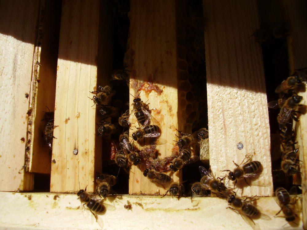 пчелопакет купить