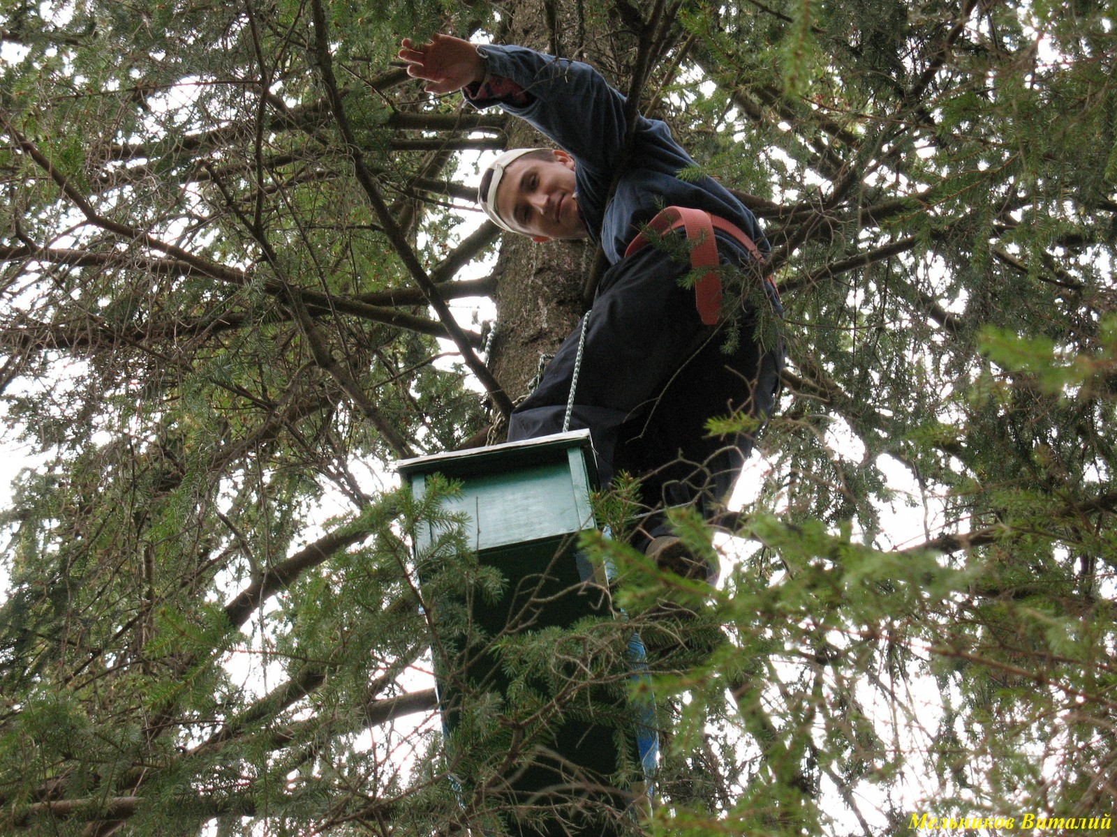 на дереве с ловушкой пчел