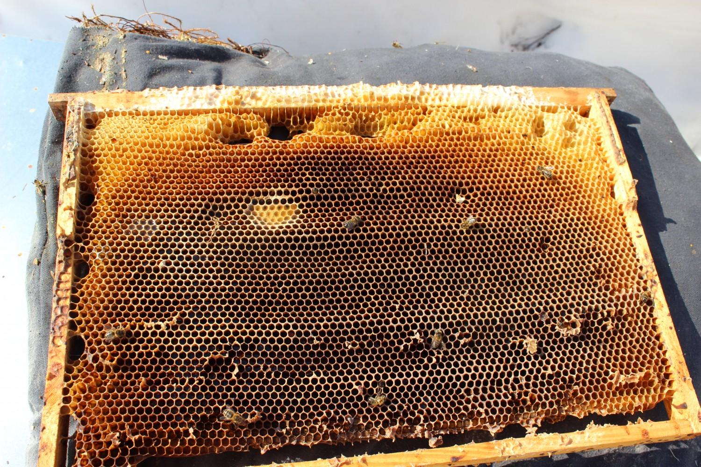 сушнина для ловушек на пчел