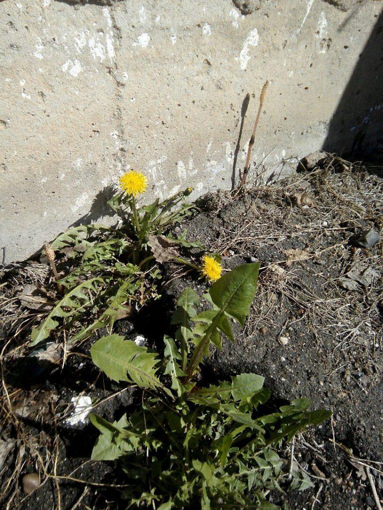раание цветы весной