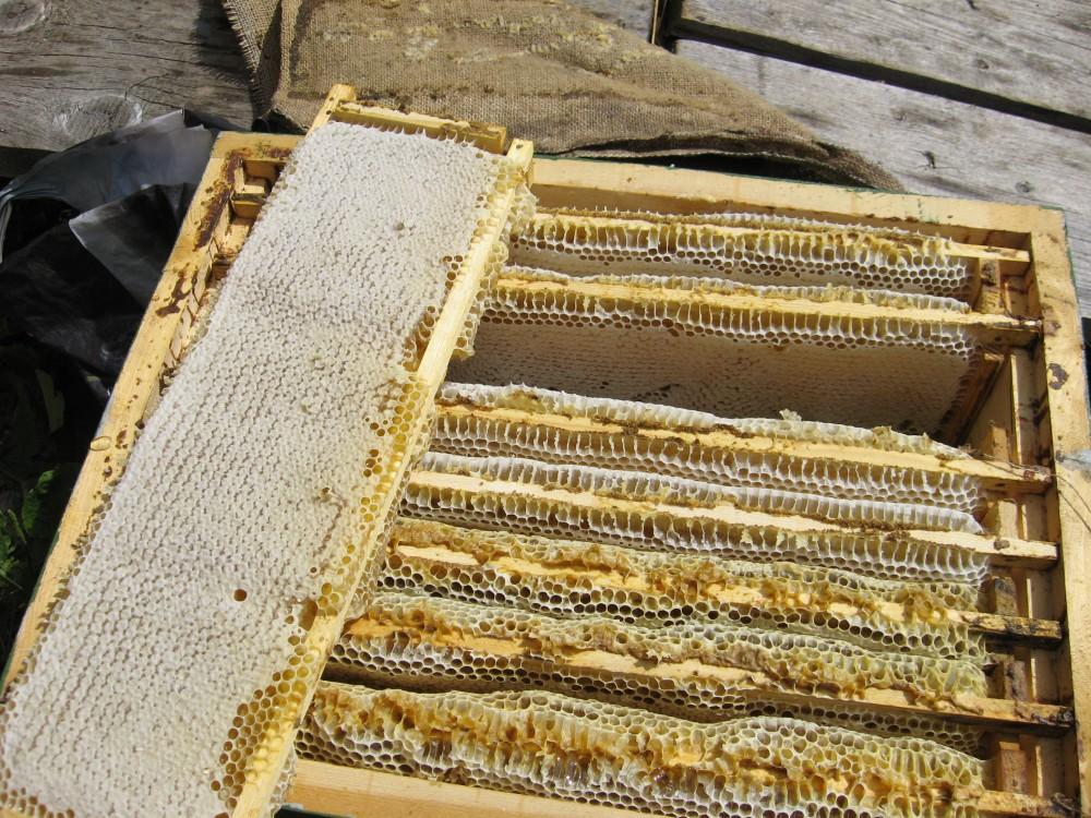 почему дорогой мед в стотах