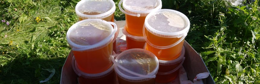 Кострома мед