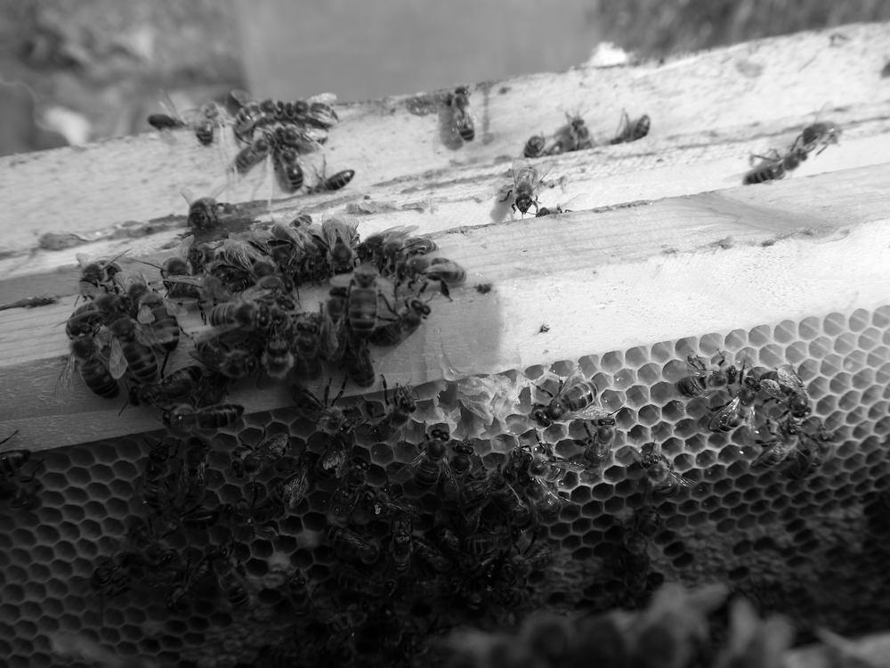 спят ли пчелы