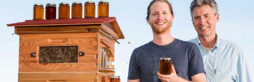 вытекающий мед из улья