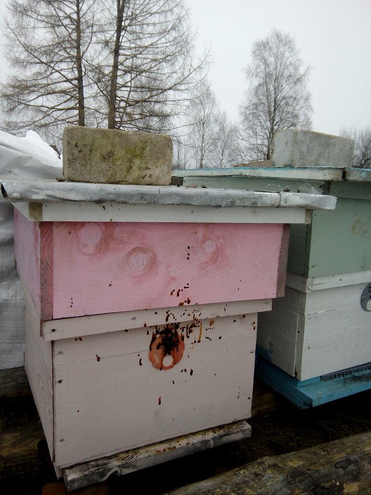 понос пчел
