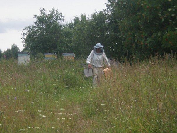 пасека у дачи пчеловодство для начинающих