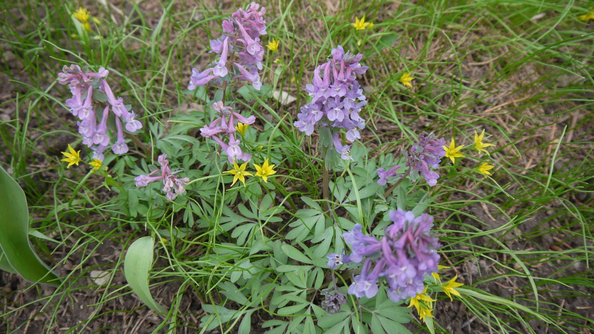 цветы на пасеке