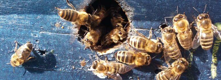 гибель пчел